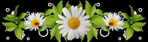 Znalezione obrazy dla zapytania: szlaczek kwiaty